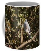 Heron At Katherine Gorge Coffee Mug