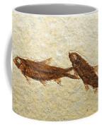 Herring Fish Fossil Coffee Mug
