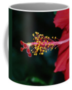 Hibiscus 3 Coffee Mug