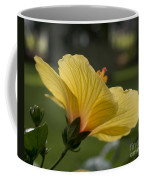 Hibiscus 'sunny Wind'  3407 Coffee Mug