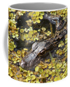 Hiding Alligator Coffee Mug