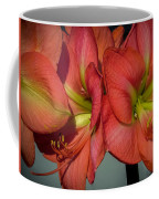 Hippeastrum Coffee Mug