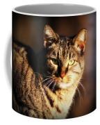 Homeless Cat Coffee Mug