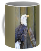 Homosassa Springs Bald Eagle Coffee Mug