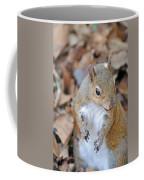 Homosassa Springs Squirrel 2 Coffee Mug