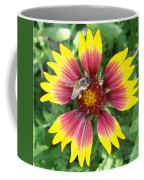 Honey Bee On A Indian Blanket Coffee Mug