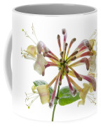 Honeysuckle Coffee Mug