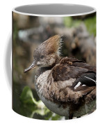 Hooded Merganser Female Coffee Mug