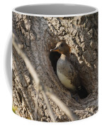 Hooded Merganser Getting Ready To Fly Coffee Mug