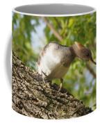 Hooded Merganser Listening Coffee Mug