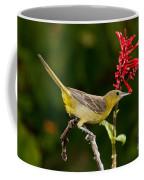Hooded Oriole Female Coffee Mug