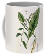 Horseradish Coffee Mug by Elizabeth Blackwell
