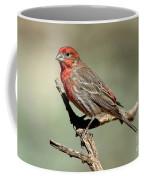 House Finch Carpodacus Mexicanus Coffee Mug