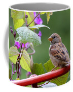 House Sparrow On A Wheel Coffee Mug