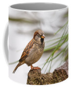 House Sparrow Passer Domesticus On The Perch Coffee Mug