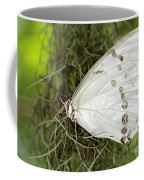 Huge White Morpho Butterfly Coffee Mug