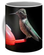 Hummingbird Anna's Posing For The Camera Coffee Mug