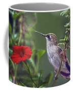 Hummingbird Delight Coffee Mug