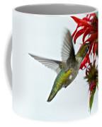 Hummingbird Focused On The Scarlet Bee Balm Coffee Mug
