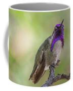 Hummingbird Male Costa Coffee Mug