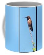 Hummingbird On Acacia Bush Twig Coffee Mug