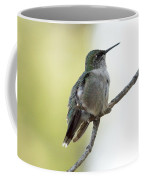 Hummingbird Sitting On A Branch Coffee Mug