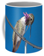 Hummingbird Yawn With Tongue Coffee Mug