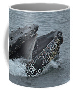 Humpback Whale  Lunge Feeding 2013 In Monterey Bay Coffee Mug