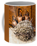 Hungry Baby Swallows - Antelope Island - Utah Coffee Mug by Gary Whitton