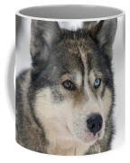 Husky Dog Breading Centre Coffee Mug by Lilach Weiss