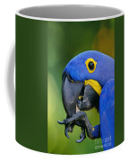 Hyacinth Macaw Anodorhynchus Coffee Mug