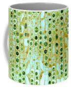 Hyacinth Root Tip Cells Coffee Mug