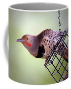 Intergrade Red Shafted And Yellow Shafted Northern Flicker Male Coffee Mug