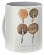 Hypodendrums Fagi And Queris Coffee Mug