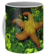I Found A Starfish Coffee Mug