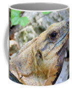 Iguana Of The Uxmal Pyramids In Yucatan Mexico Coffee Mug