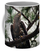 Immature American Bald Eagle Coffee Mug