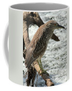 Immature Night Heron Coffee Mug