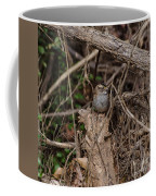 Immature White-throated Sparrow Coffee Mug