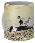 Immature Wood Ducks Coffee Mug