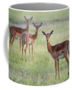 Impalas Aepyceros Melampus Petersi Coffee Mug