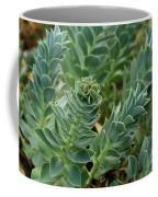 In The Green Coffee Mug