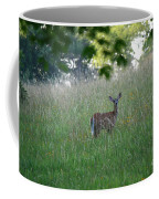 White-tailed Deer In Meadow  Coffee Mug