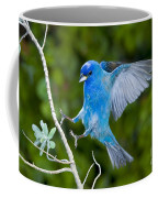 Indigo Bunting Alighting Coffee Mug