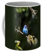 Indigo Bunting - Img-428-003 Coffee Mug