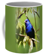 Indigo Bunting- Img_494-006 Coffee Mug
