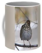 Inquisitive Hermit Thrush Coffee Mug