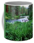 Iris Flowers By The Metolius River Coffee Mug
