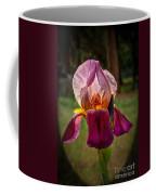 Iris In The Spotlight Coffee Mug