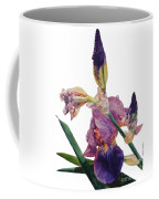 Watercolor Of A Tall Bearded Iris In A Color Rhapsody Coffee Mug